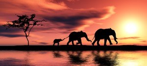 follow elephants lead to be cancer free. HappySexyLove.com